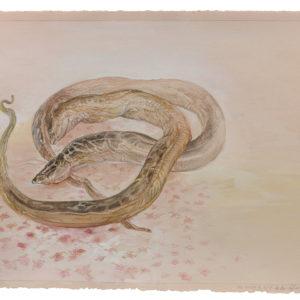 Eel Study III