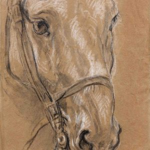 A Study of a Horse's Head
